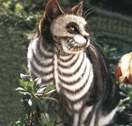 chat zebre copie