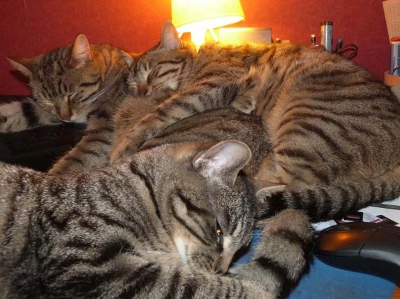 trois chats 13-11-12