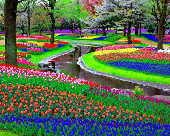 keukenhof pays bas decouverte grand jardin fleurs monde hollande mes photos jeweid. Black Bedroom Furniture Sets. Home Design Ideas