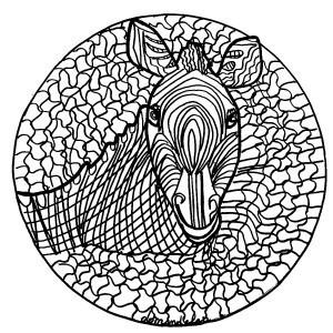 zebre-