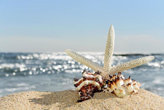 étoiles-de-mer-