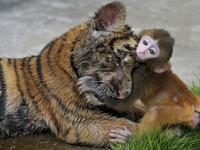 la-souffrance-animale-