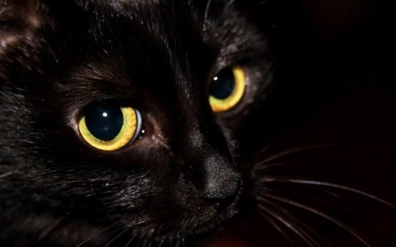 chat_noir