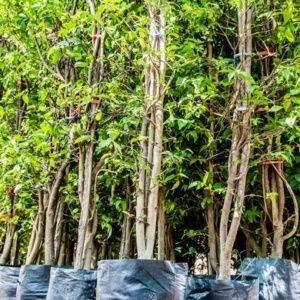 arbres-en-racines