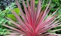 arbustes-plantes--