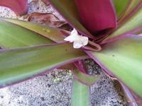 -plante-exotique 1