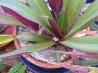 plante-exotique-