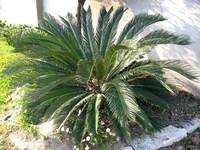 plantes-tropicales-