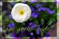 -week-end