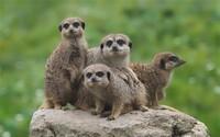 Cute-animals-