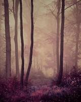 -nature 15