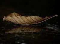 -nature 4