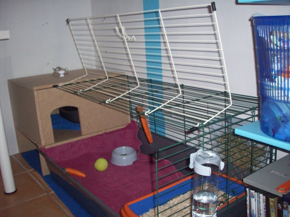 mon hamster s 39 est retrouv dans la cage de mon lapin au. Black Bedroom Furniture Sets. Home Design Ideas