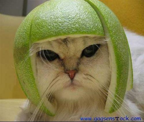 casque_cat