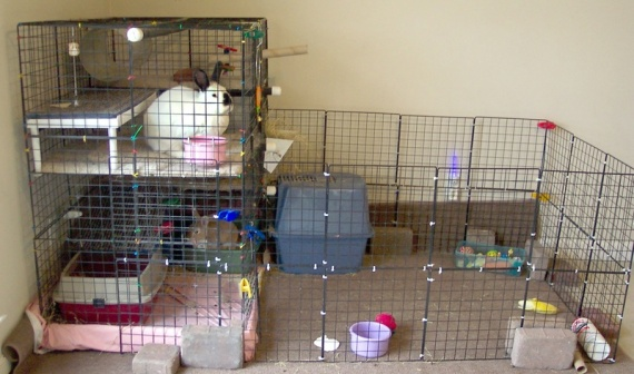 Robyn's Rabbits in Homemade Home