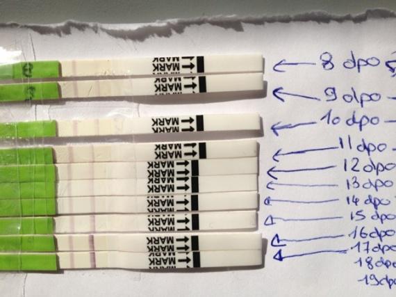 test-evolution-to-img