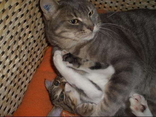mon chaton essaye de teter