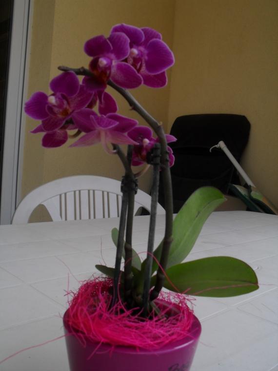 hs j 39 ai eu une petite orchid e au mariage comment bien m 39 en occuper mariage forum vie. Black Bedroom Furniture Sets. Home Design Ideas