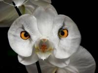 fleurs-bougies-orchidee-surprenante-img