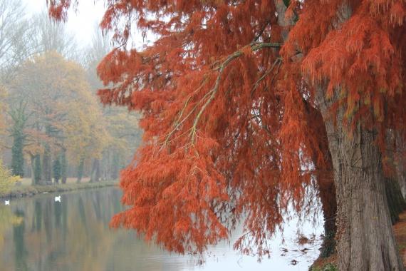 l'arbre de Sully