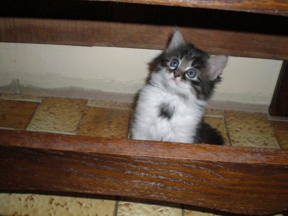 Dis, tu me regardes??