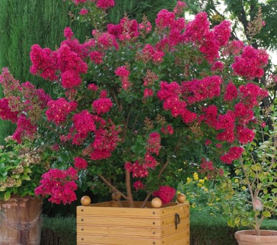 conseils pour terrasse d 233 butante en jardinage jardinage forum vie pratique