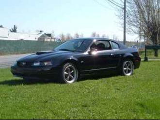 Mustang@Steph1