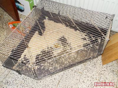 nouvelle cage adoption d 39 un malou hamsters cochons d. Black Bedroom Furniture Sets. Home Design Ideas