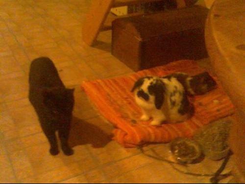 photo des trois dans maison.jpg1.
