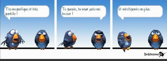 image drole oiseau
