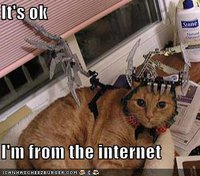 funny-pictures-cat-from-the-internet1