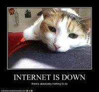 lolcat-internet-down