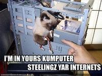 lolcat_internet