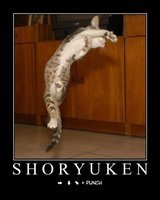 shoryukenlolcat