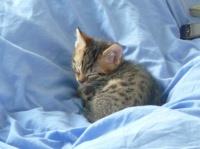 188 - Chaton sur le lit