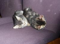 190 - Deux chatons sur une chaise