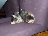 191 - Deux chatons sur une chaise