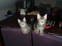 194 - Deux chatons sur une chaise