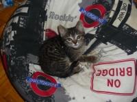 195 - Un chaton sur un pouf