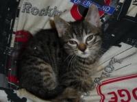 196 - Bébé chat sur le pouf