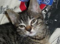 197 - Bébé chat en gros plan