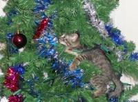 19 décembre : 199 - Mode déco de Noël