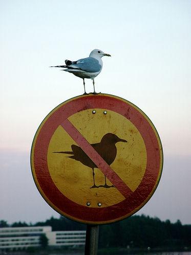 interdit aux mouettes !