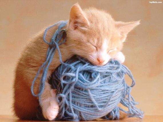 mignon-pelote-laine