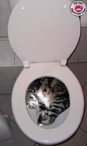 Ou-se-cache-le-chat