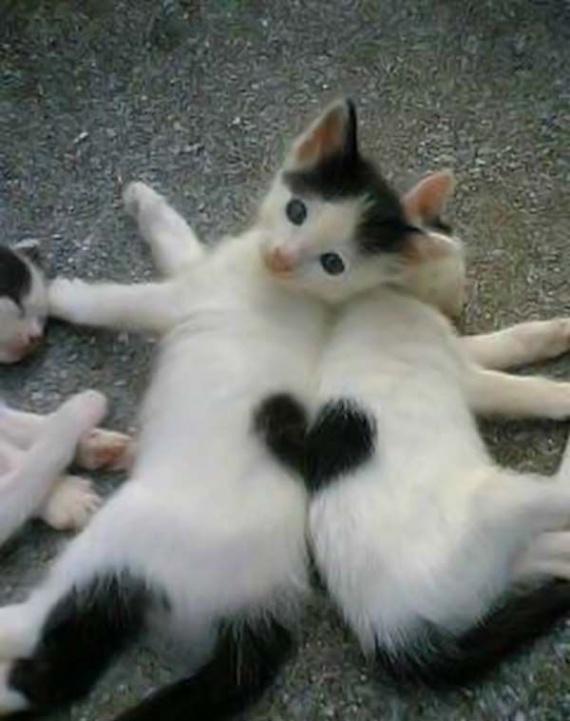 coeur de chats