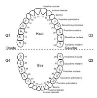 numerotation-des-dents