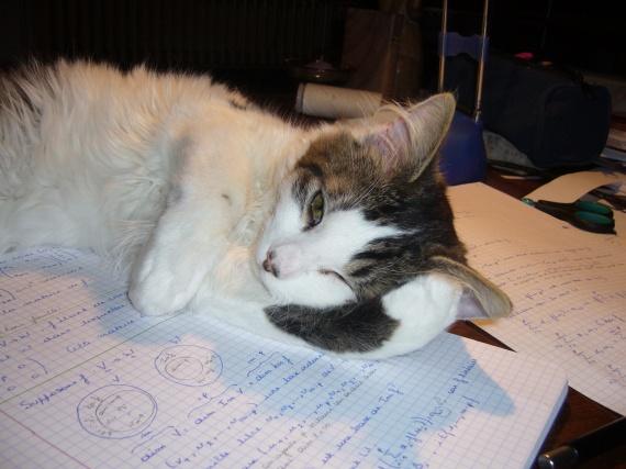 Kiwi qui m'aide pour mes exams ;)