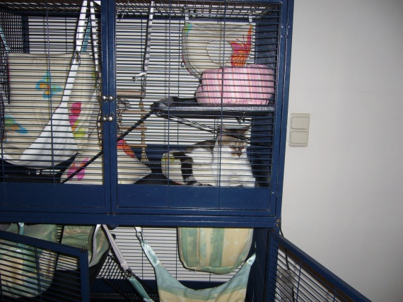 Tequila cage