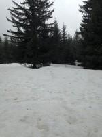 neige -mai